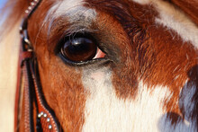 Close Up Of Horse Eye Looking ...
