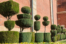 Neatly Trimmed Trees (topiary)...