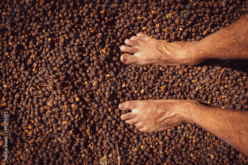 Male foot on dry coffee seed Billede på lærred