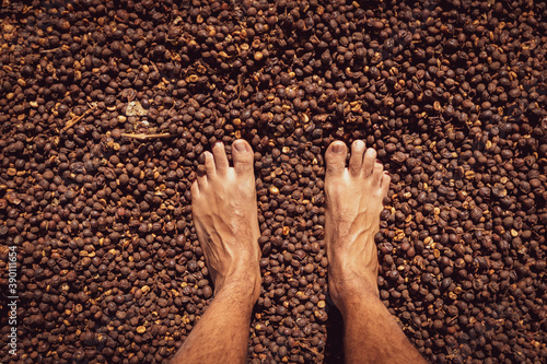Fotografering Male foot on dry coffee seed