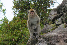 The Monkey On Mount Lawu Is Looking At You, Indonesia