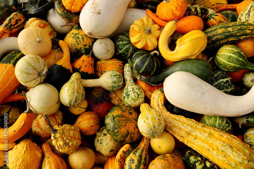 Fotomural pumpkins and gourds