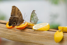 Tropical Butterfly Sucking Nec...