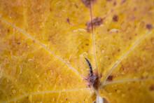 Foglie Colorate D'autunno Su Sfondo Di Beola Grigia Viste Dall'alto