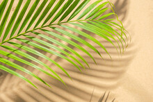 Nature Background Of Green Pal...