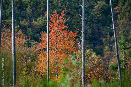 Autumn colors in Casentino,Tuscany. Landscape foliage.