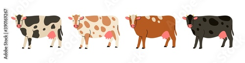 Set of four Cows standing and looking in camera. Hand drawn colored trendy Vector illustration. Funny characters. Cartoon style. Flat design. Different colors. Isolated on white background