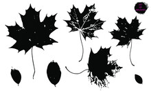 A Set Of Brush Strokes-leaves. Collection Of Vector Drawings For Grunge Design And Decor, Isolated On A White Background.