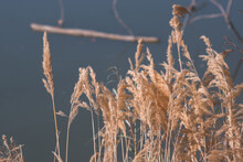 Autumn Landscapes, Nature And ...