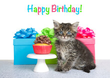 Adorable Little Kitten Sitting On Grey Textured Floor Next To Tiny Table With Single Chocolate Frosted Cup Cakes, Colorful Present Boxes With Matching Bows Behind. Kitty Looking Directly At Viewer.