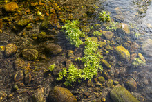 Close-up Of Water Plant And Ro...