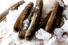 Close Up Of Pacific Razor Clam...