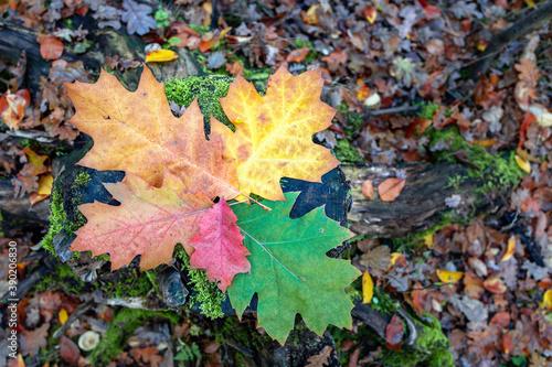 Fototapeta liście jesienne kolory różne obraz