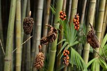 Gros Plan Graines Et Bambou