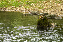 Old Rotting Tree Stump At The Edge Of A River During Fall