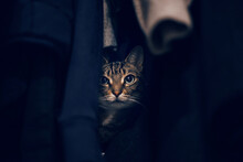 Funny Scared Tabby Pet Cat Hid...