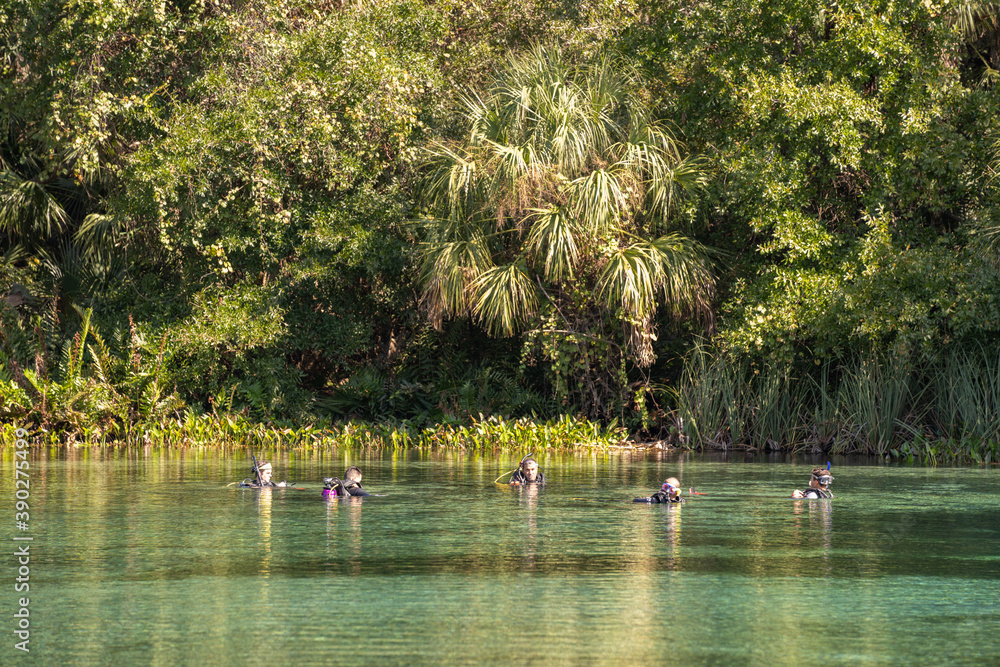 Fototapeta Group of divers at Alexander Springs Ocala National Forest Florida USA
