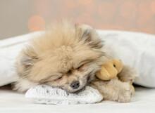 Pomeranian Spitz Puppy Hugs Fa...