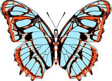 Victorina Stelenes Butterfly Vector Illustration