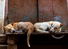 Two Dogs Are Sleeping At Stret...