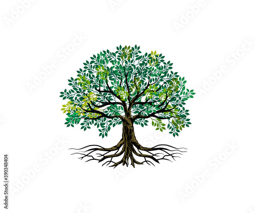 Foto Tree and roots vector, tree with round shape
