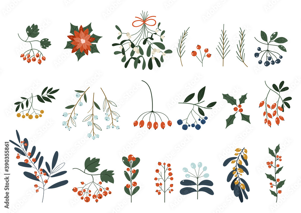 Fototapeta Set of plants with flowers, spruce branches, leaves and berries. Christmas decorations. Holly, spruce, red berries. Hand drawn design elements. Floral design elements for Christmas and New Years.