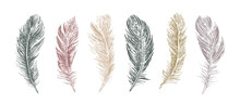 Feathers Set On White Background. Hand Drawn Sketch Style.