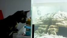Domestic Cat Looks At Illumin...