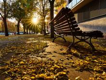 Leaves On The Street Floor In ...