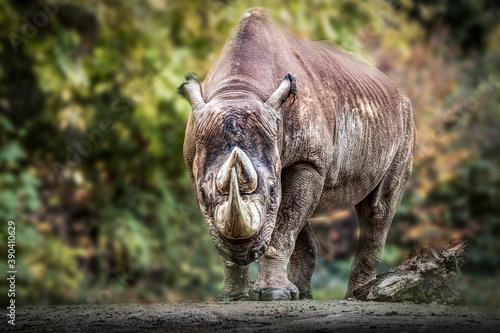 portrait of a black rhino Fototapet