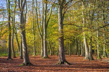 Fall woodland landscape