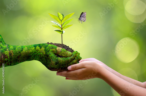 environment Earth Day In the hands of trees growing seedlings Fototapet