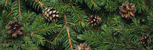 Christmas Tree Branches And Co...