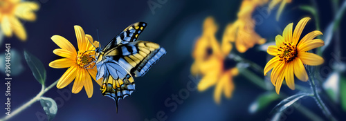 Small yellow bright summer flowers and bee  on a background of blue and green foliage in a fairy garden Fototapet