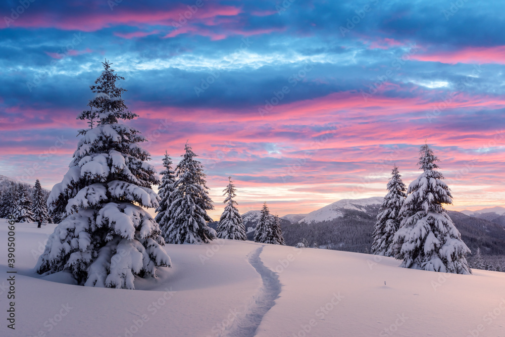 Fototapeta Fantastic winter landscape in snowy mountains glowing by morning sunlight. Dramatic wintry scene with frozen snowy trees at sunrise. Christmas holiday background