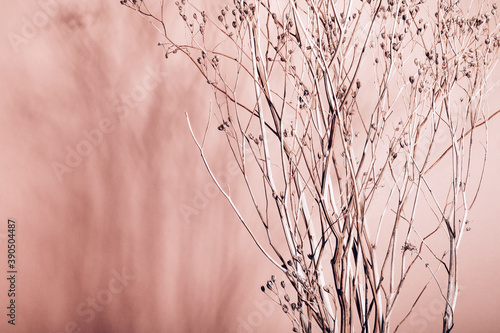 Fototapeta Home interior floral decor from natural dry flowers or twigs