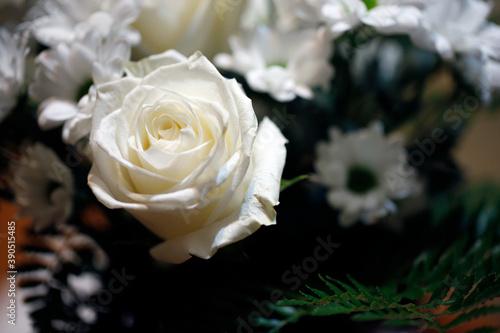 Obraz Un bouquet de roses blanches - fototapety do salonu