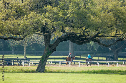 Fotografie, Obraz Bridlewood Farm, Ocala, FL