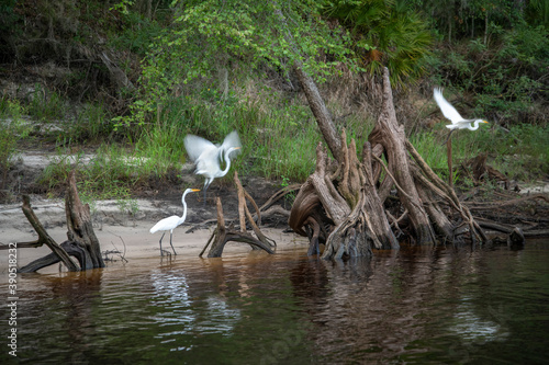 Natural vegetation along Suwanee River waterway near Rock Bluff, FL Fotobehang