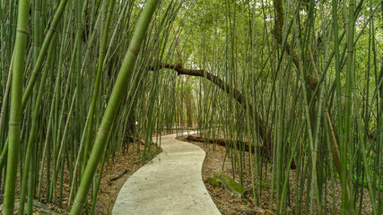 Path through bamboo trees at Kanapaha Gardens - Gainesville, Florida