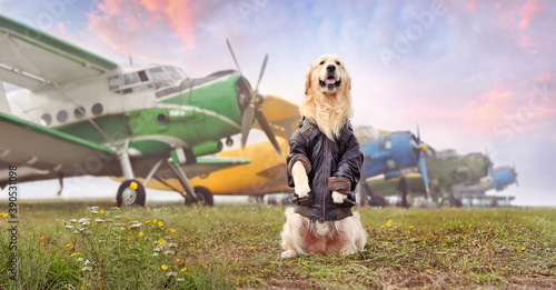 Fototapeta Wide picture with a dog sitting on hind legs at the airport field