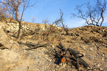 Cut Down Trees And Burnt Plants On Dry, Rocky Area. Climate Change, Human Damage To Nature Concepts
