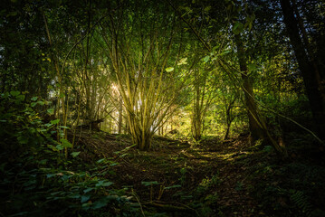 Forest view on sunny summer day. Nature concept