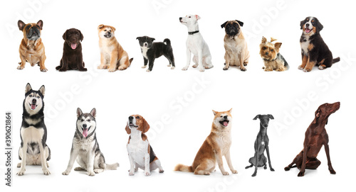 Set of adorable pets on white background. Banner design © New Africa