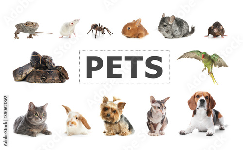 Set of different pets on white background © New Africa