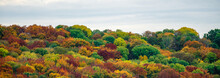 Colorful Tree Crowns In Autumn