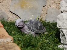 Tortuga De Piedra En El Jardin