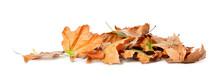 Heap Of Fallen Leaves On White Background. Autumn Season