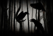 Black Crows In Creepy Misty Forest. Fantasy World