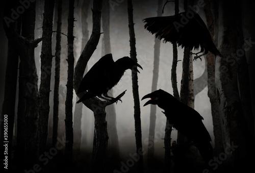 Tela Black crows in creepy misty forest. Fantasy world
